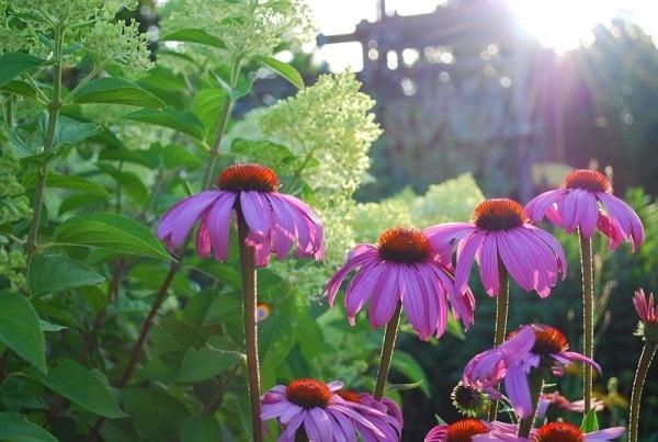 Garden at Morning Light