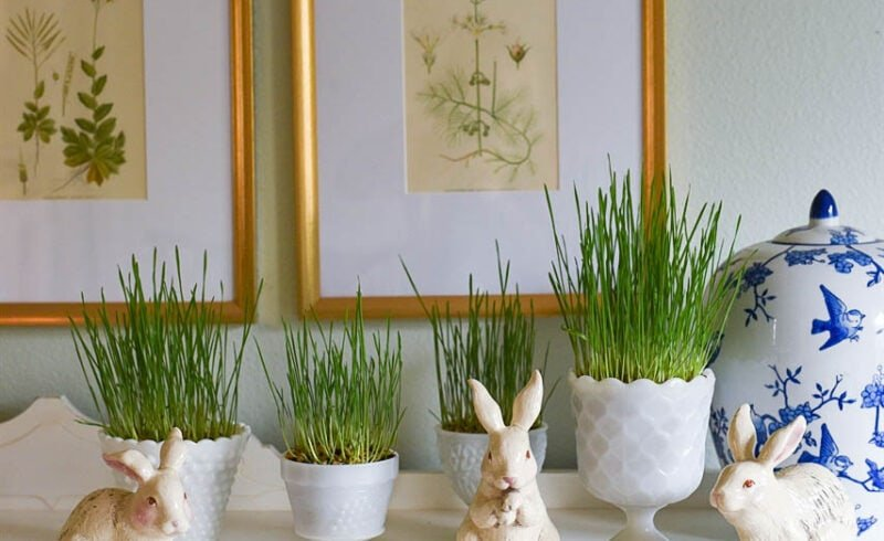 easter grass and bunnies